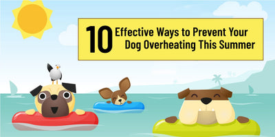 10 Effective Ways to Prevent Your Dog Overheating This Summer