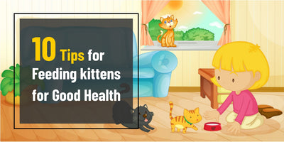 10 Tips for Feeding kittens for Good Health