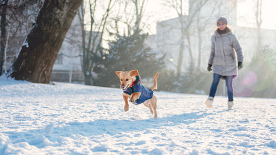 IMPORTANCE OF WINTER WEAR FOR PETS.