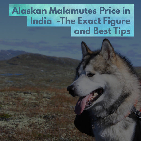 Alaskan Malamutes Price In India The Exact Figure And Best Tips