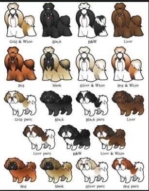 shih tzu colors variants dogfather