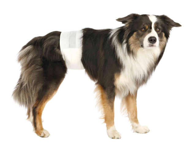 Trixie Disposable Diapers for Male Dogs