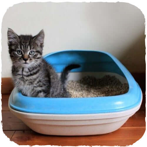 Beco Pets Recycled Bamboo Cat Litter Tray – Blue