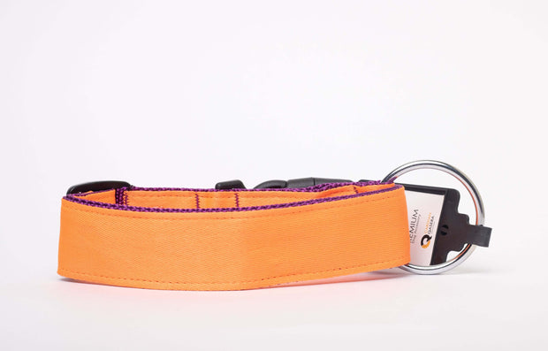 CQ Premium Collar For Dogs
