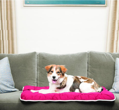 Dogs Gone Smart Multi-Purpose Bed Sleeper Cushion / Crate Pad – Espresso