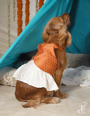 Halter Neck Fish Cut Emroidered Dress For Dogs