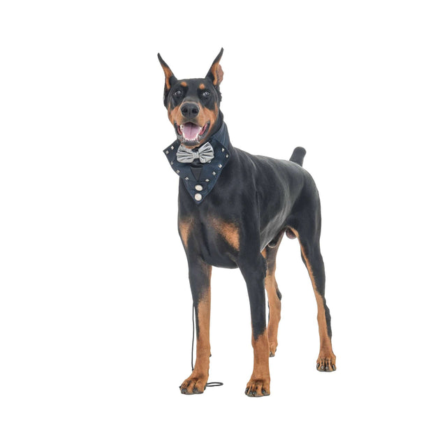 Black Tuxedo Dog Bandana With Easy To Use Adjustable Strap