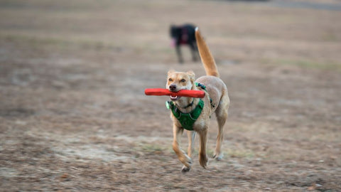 Ruffwear Gnawt-a-Stick Rubber Throw Toy For Toys