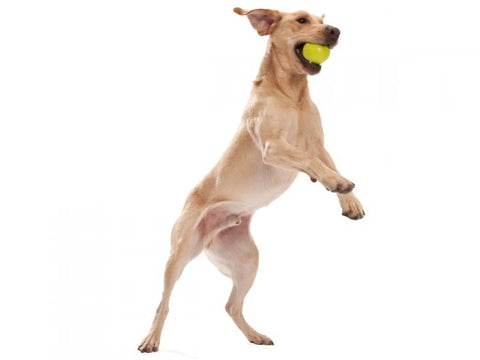 West Paw Jive With Zogoflex Dog Ball
