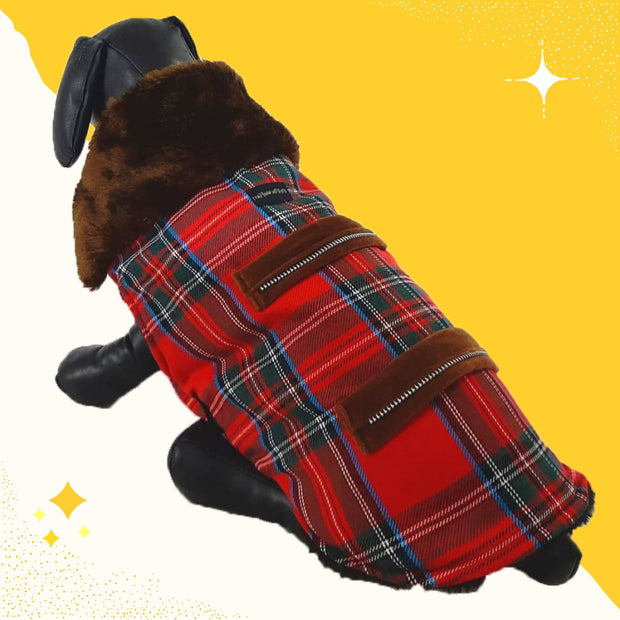 Regular Winter Wear For Dogs
