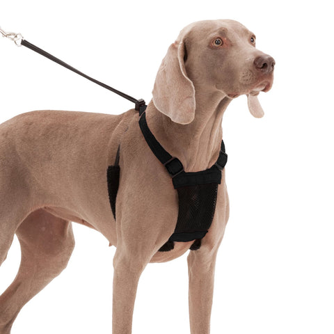 YUP! Non-Pull Mesh Harness For Dogs- Black