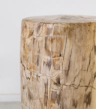 Petrified Wood Occasional Table / Javanese