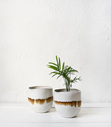Papaya / Nino Bowl-Planter