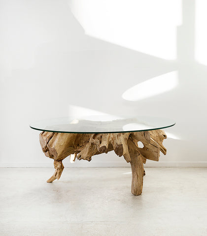 Teak Tree Root Coffee Table w Glass