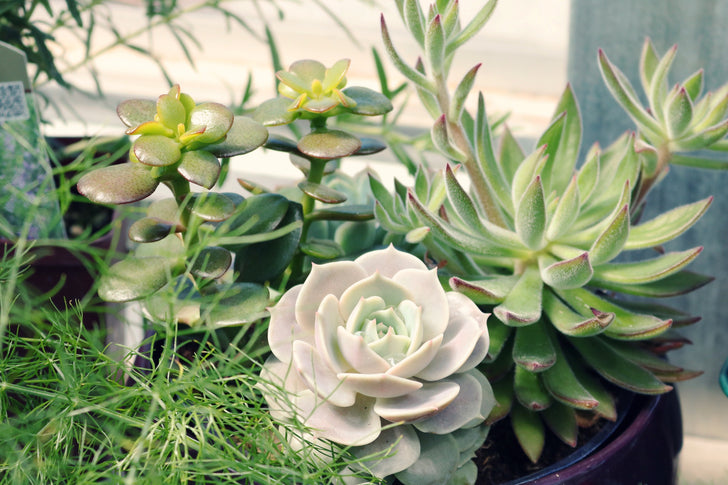 Best Planter Pots for a Succulent Garden