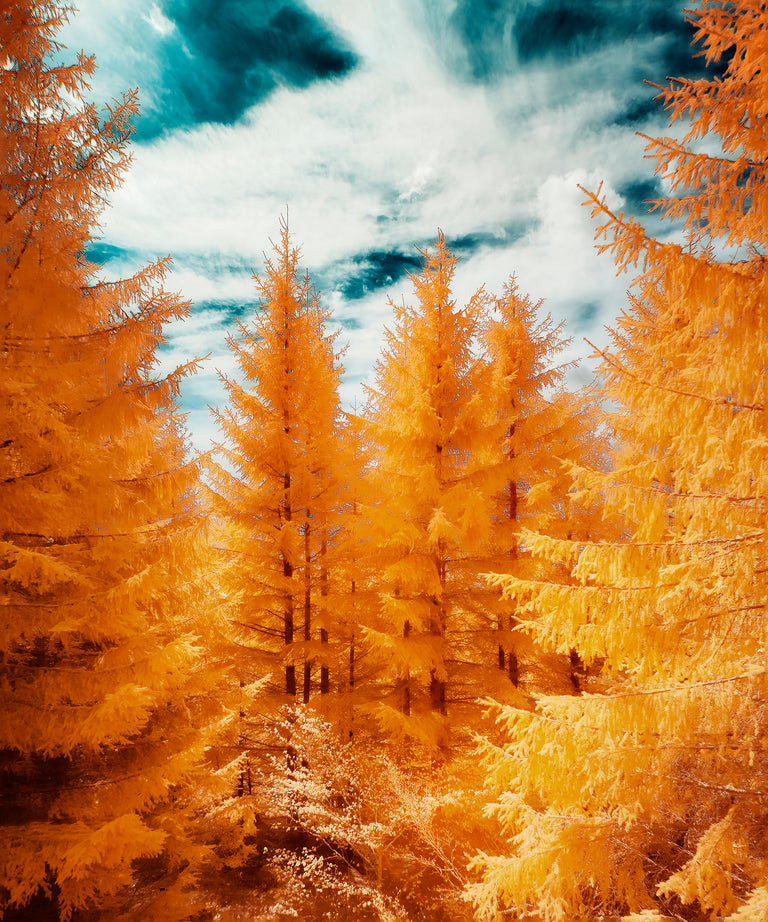 The Yellow Forest by David Keochkerian | stretched canvas wall art