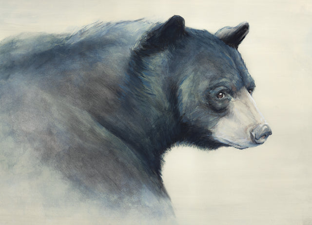 Black Bear by D'Alessandro Léon | stretched canvas wall art