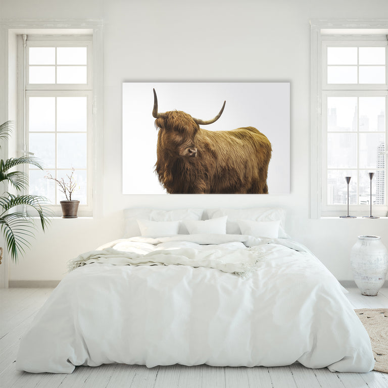 Highland Cattle II by Adam Mowery (Canvas Wall Art)