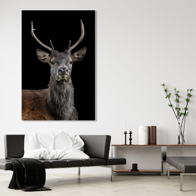 The Scotsman by Adam Mowery | stretched canvas wall art