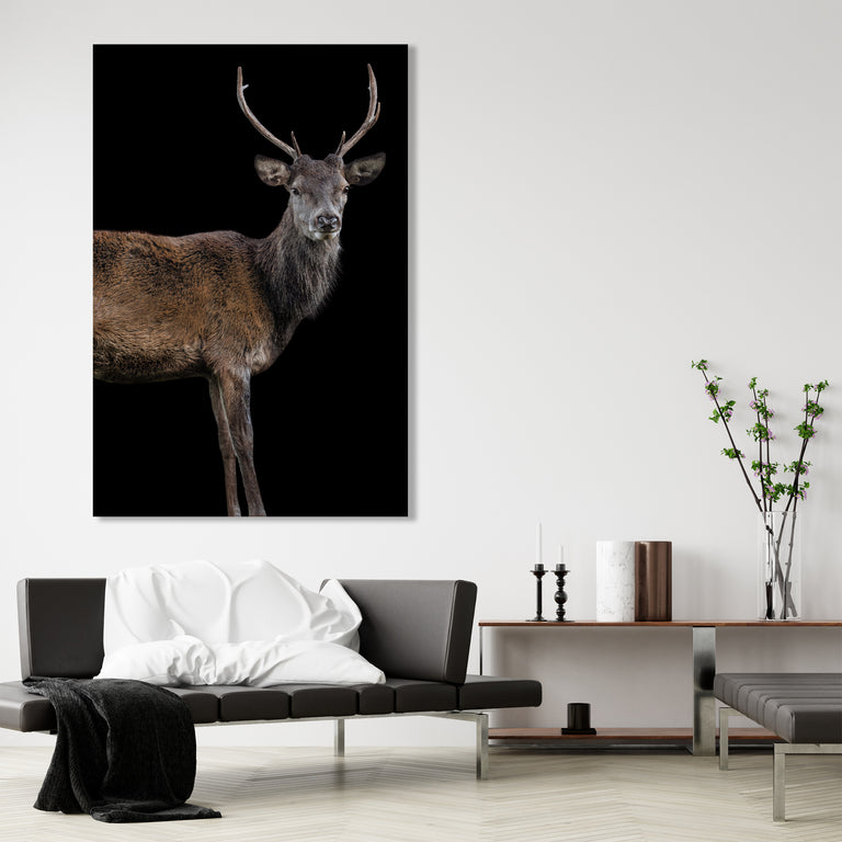 Scotish Red Deer II by Adam Mowery | stretched canvas wall art