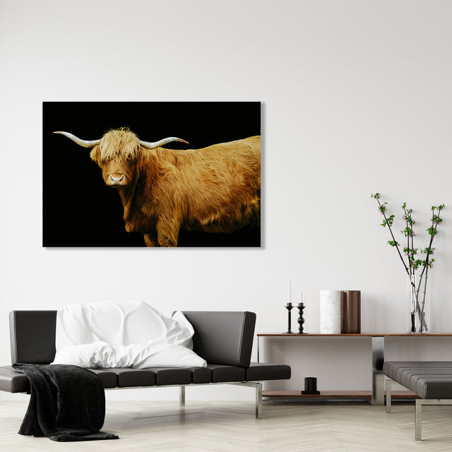 Highland Cattle on Black by Adam Mowery | stretched canvas wall art