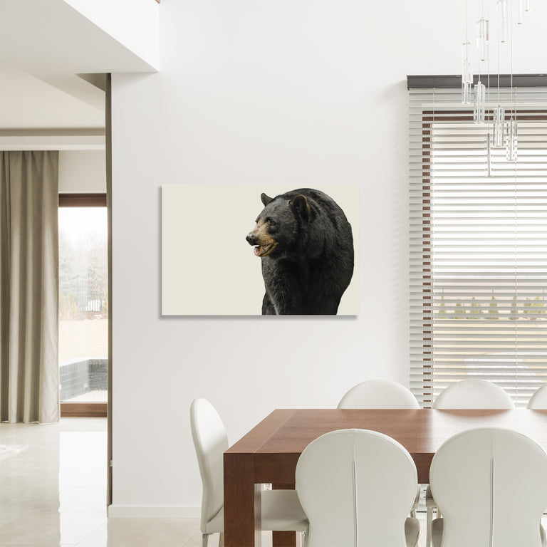 Black Bear II by Adam Mowery (Canvas Wall Art)