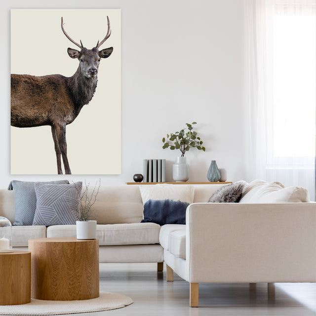 Scotish Red Deer III by Adam Mowery | stretched canvas wall art