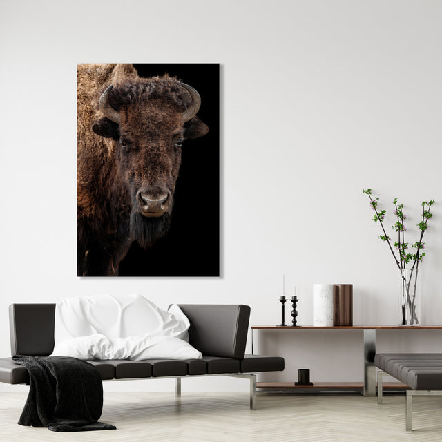 Buffalo on Black III by Adam Mowery | stretched canvas wall art