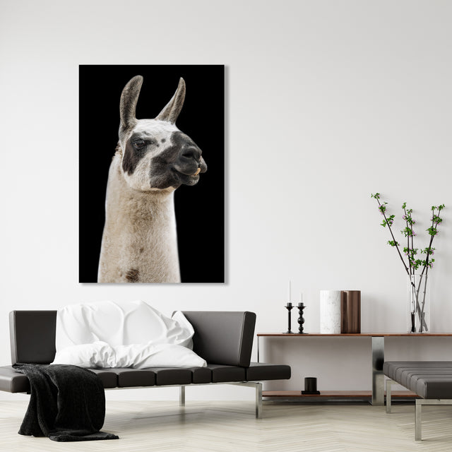 Lama I by Adam Mowery | stretched canvas wall art