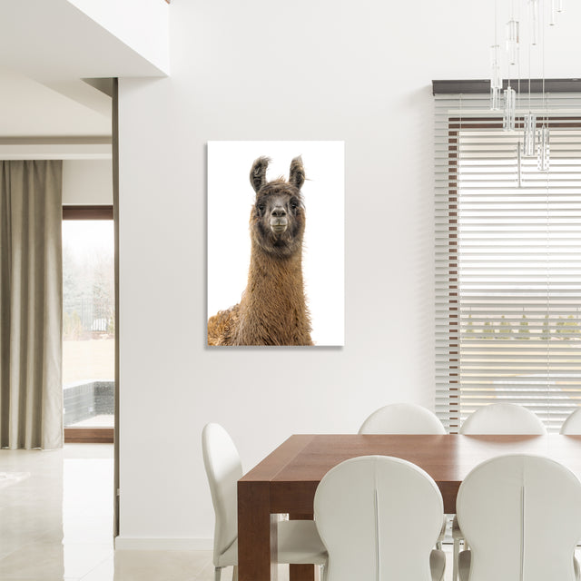 Llama Pack II by Adam Mowery | stretched canvas wall art