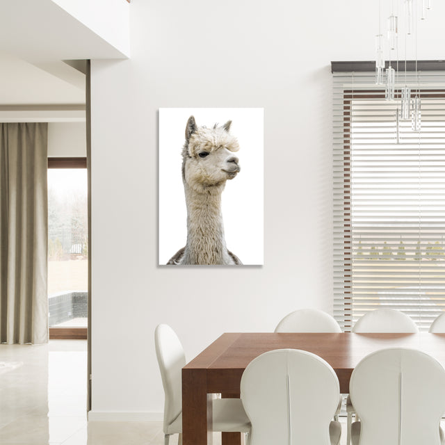 Llama Pack III by Adam Mowery | stretched canvas wall art