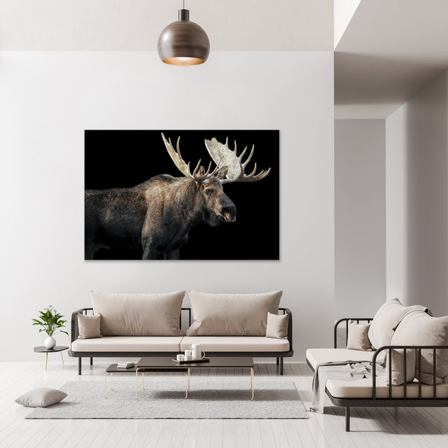 Bull Moose I by Adam Mowery | stretched canvas wall art