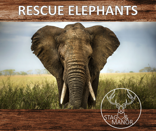 DONATE TO ELEPHANT RESCUES