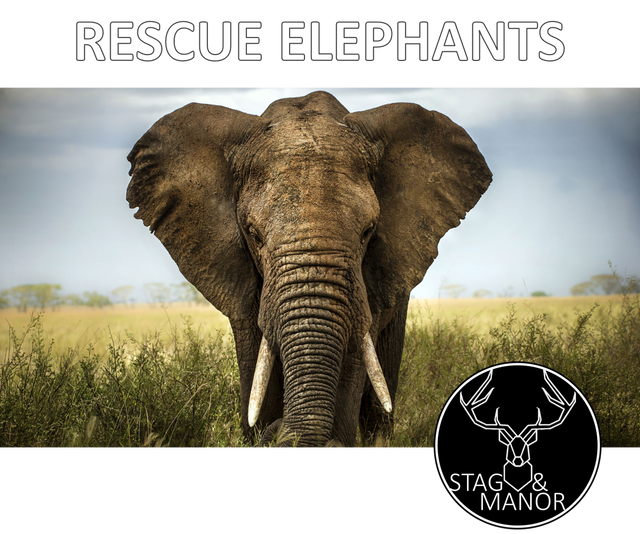 DONATE 5% TO ELEPHANT RESCUES