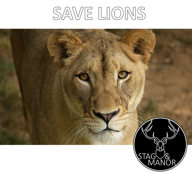 DONATE 5% TO LION RESCUES