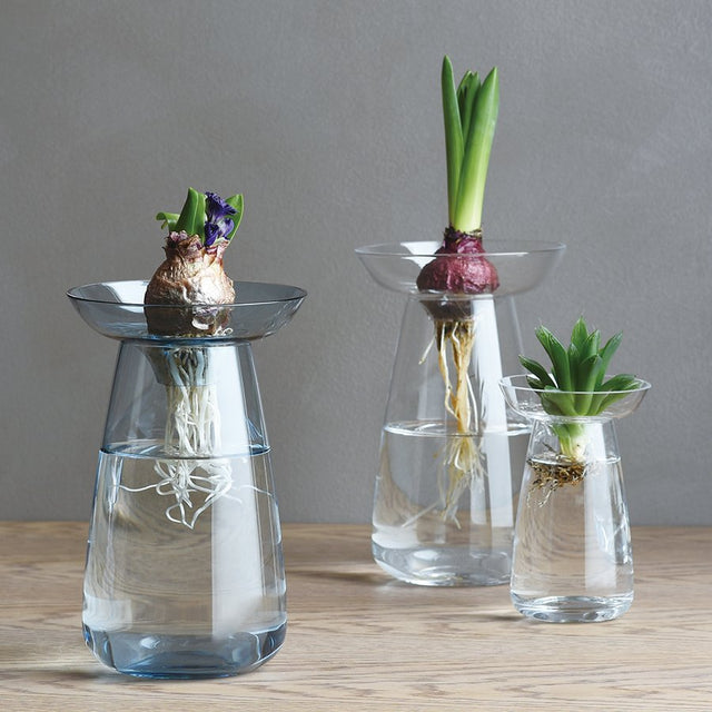 AQUA GLASS VASES regro regrow