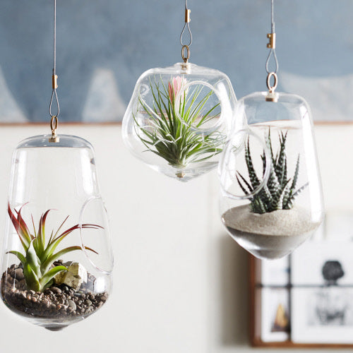 IGLOO HANGING TERRARIUMS