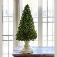 Boxwood Cone on Stand