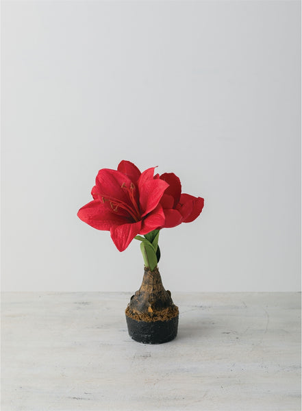 MINI AMARYLLIS SPRAY