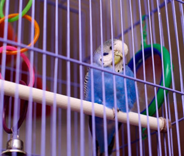 Household Hazards For Pet Birds