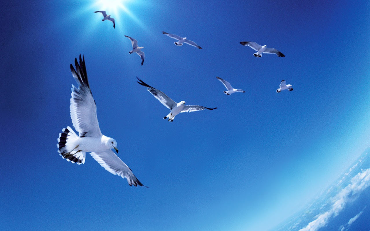 Environmental Impact of Birds