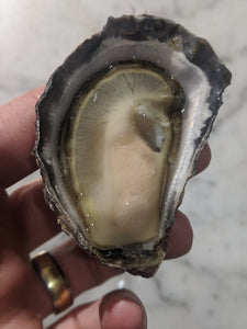 SUNDAY 12 JULY / HALF DOZEN OYSTERS / Moonlight Kiss Rock Oysters