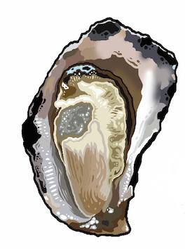 SATURDAY 31 OCTOBER / HALF DOZEN OYSTERS / Clyde River Rock Oysters