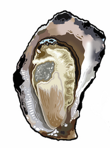 SUNDAY 1 NOVEMBER / HALF DOZEN OYSTERS / Clyde River Rock Oysters
