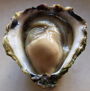 1. OYSTER TASTING & APPRECIATION / TUESDAY 3 MARCH