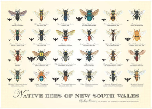 Native Bees of New South Wales - Poster