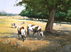 """Cows in the shadow of a tree"" watercolor painting"