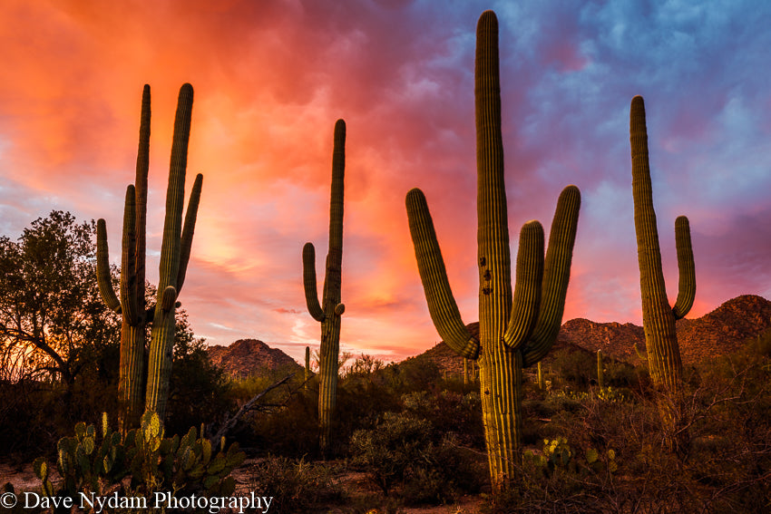 Surreal Sunset Saguaro National Park