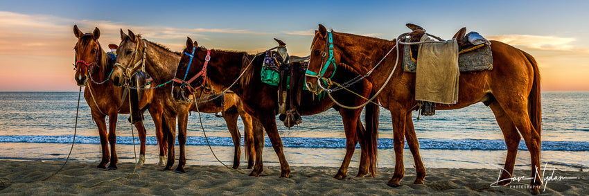 Horses on the Beach in Mexico