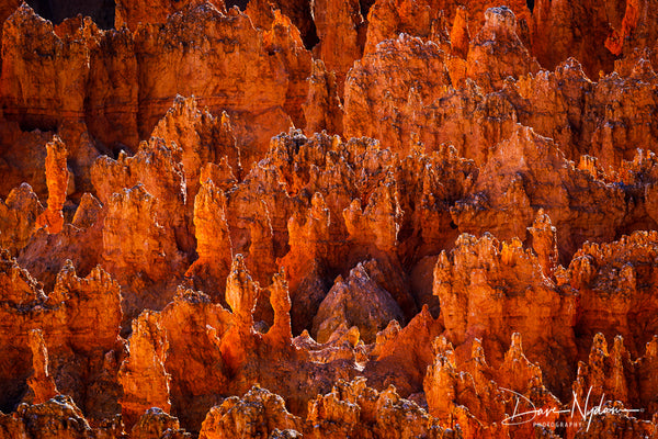 Bryce Canyon Hoodoos at Sunset